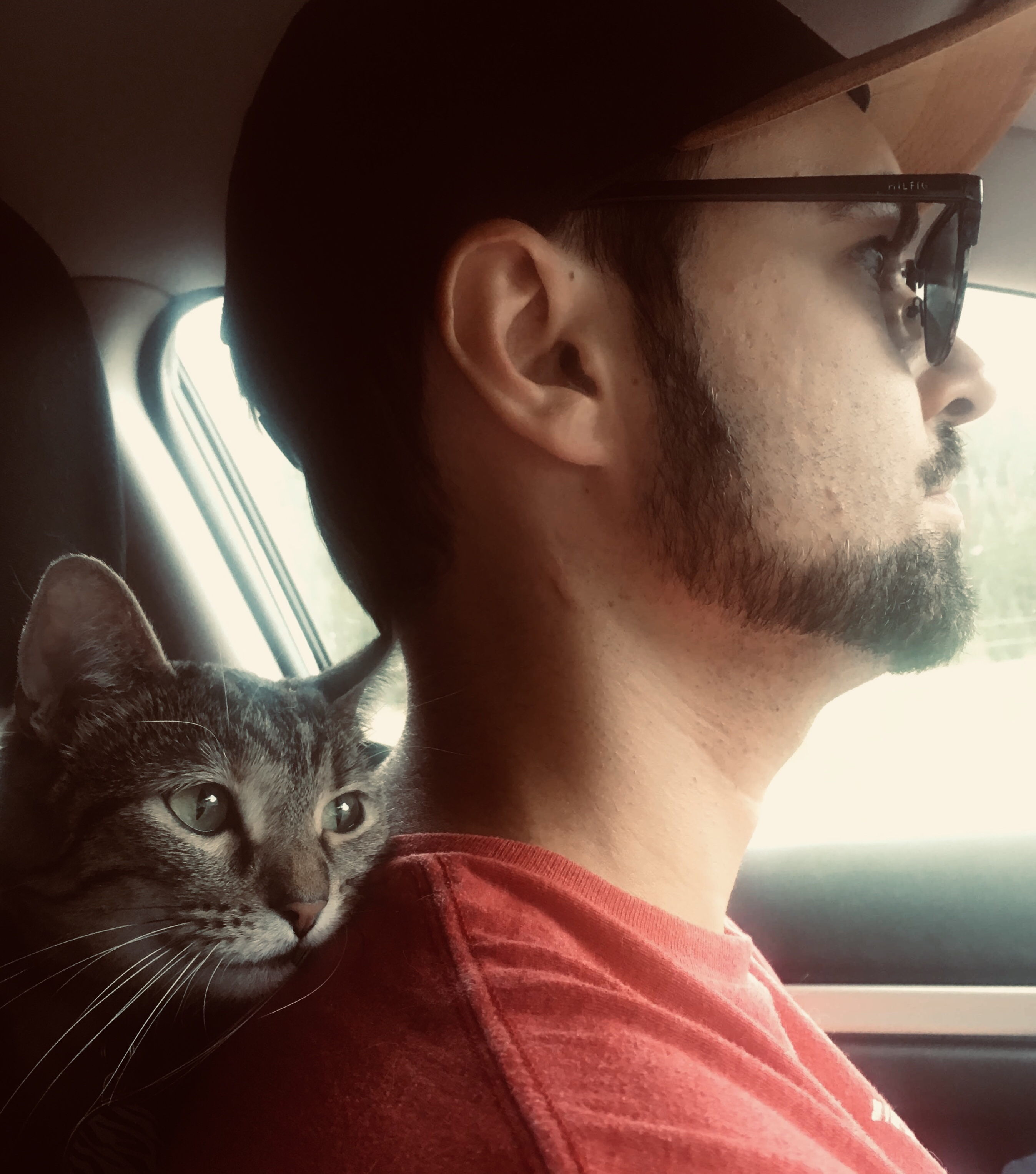 Road trip to LA with cat